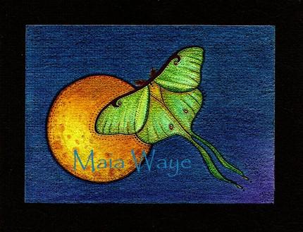 Luna moth maia