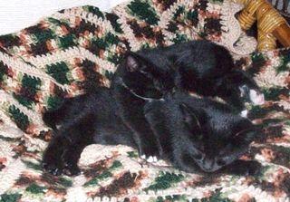 Snuggly kittens