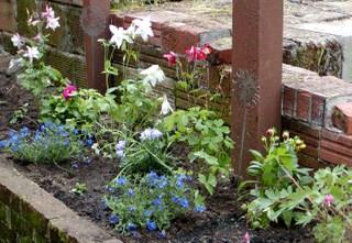 Flowers_crop